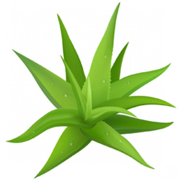 Aloe Lavande (Gel) 100ml
