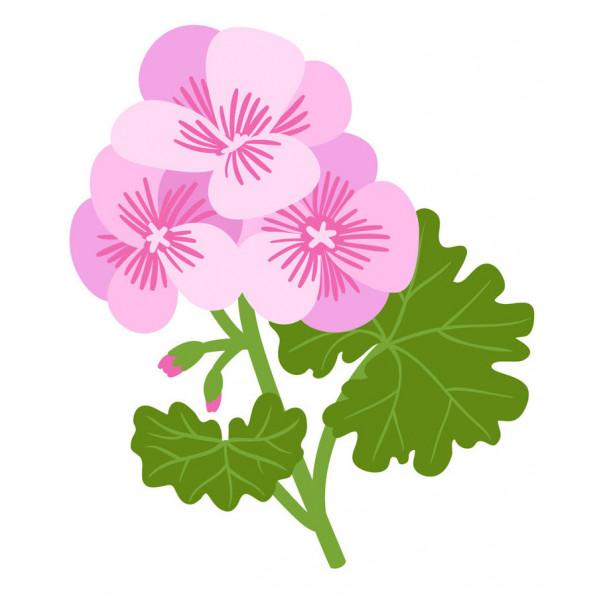 Géranium rosat 10ml