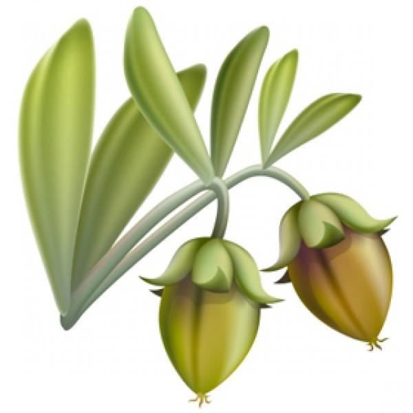 Jojoba BIO (Huile végétale) 200ml