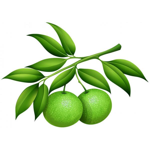 Mandarine verte 10ml
