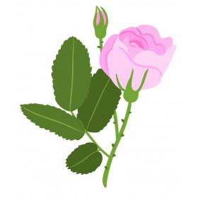 Rose turque 1ml