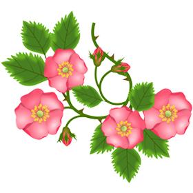 Rose musquée BIO (Huile précieuse) 100ml