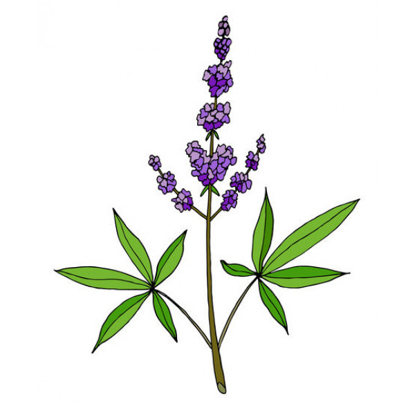 Vitex (Gattilier) 1ml